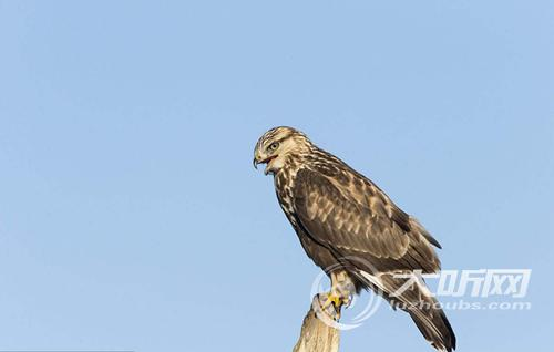 泸州叙永成功救助一只国家二级保护动物