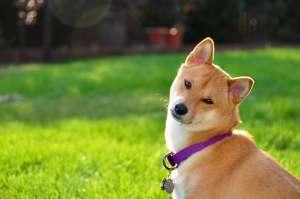 自己在家给狗狗洗澡,是爱还是伤害?
